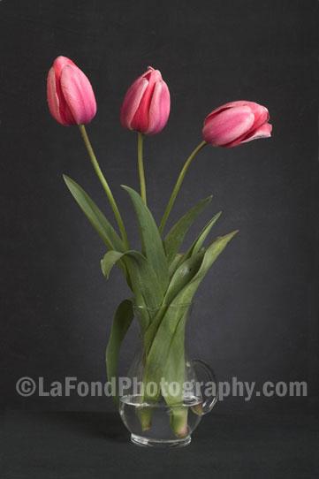 """""""Pink Tulips"""" by Richard LaFond"""