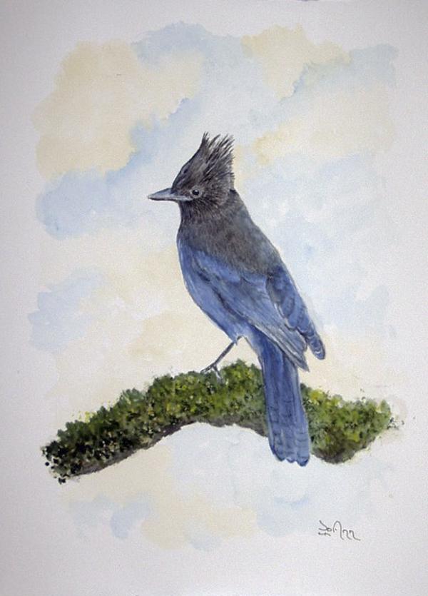 """Stellers Jay"" by Jo Ann Campbell"